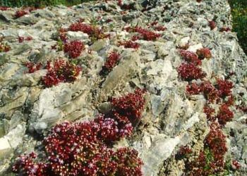 Riserva Naturale Grotta di Santa Ninfa